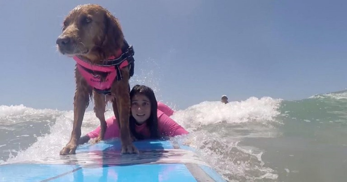 s3 8.jpg - 11-Year-Old Therapy Dog Is Also A Surfing Instructor For People With Disabilities And Veterans