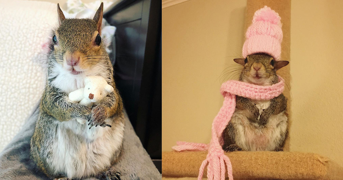 tdsf.jpg - Meet Jill, The Squirrel, Adorably Wacky Pet Who Can't Sleep Without Her Teddy Bear