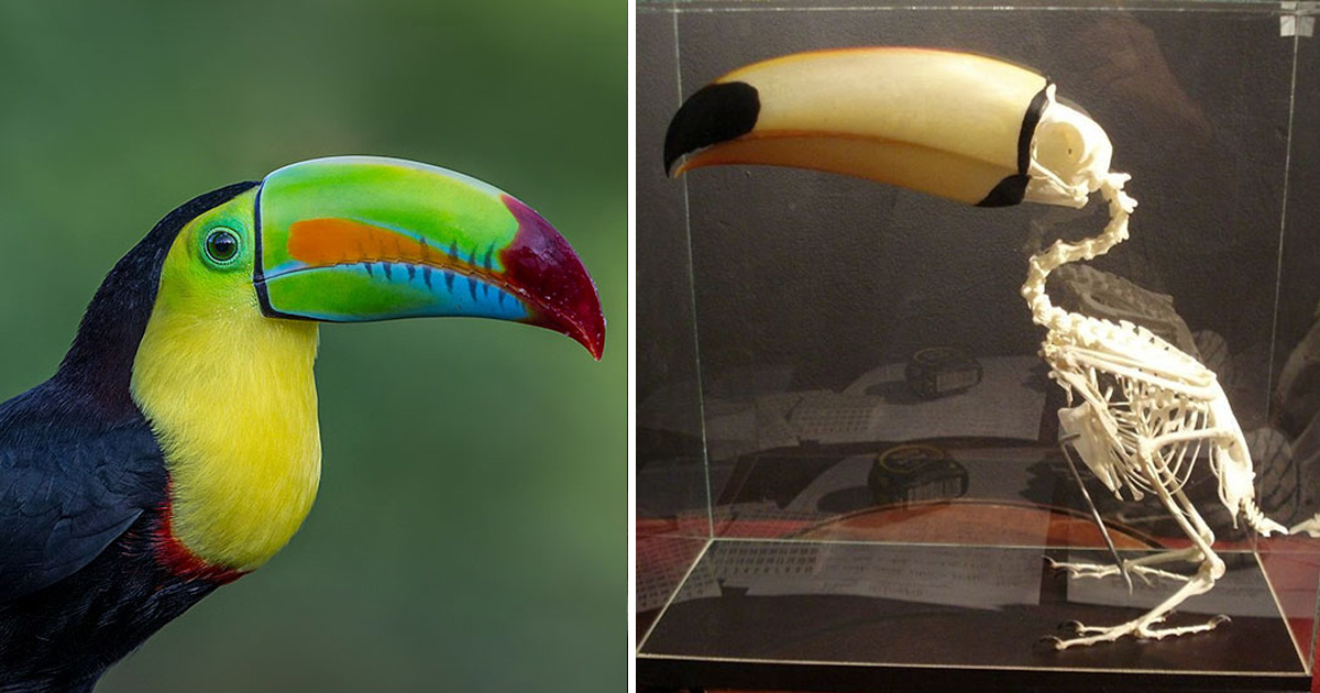 1 256.jpg - People Are Sharing Some Weird Yet Interesting Facts About Toucans