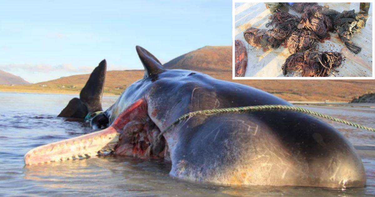 1 3.png - Sperm Whale Found Dead In An Unconventional Way