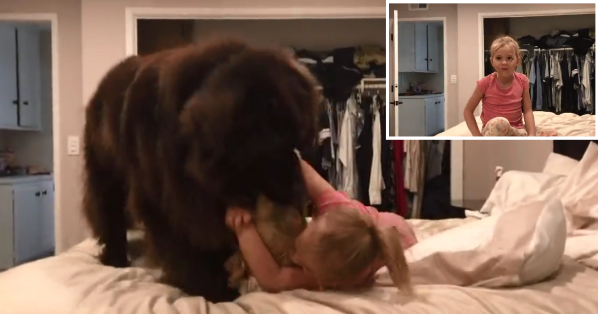 1 53.png - A Baby Girl and Her Newfoundland Dog Get Into An Adorable Pillow Fight