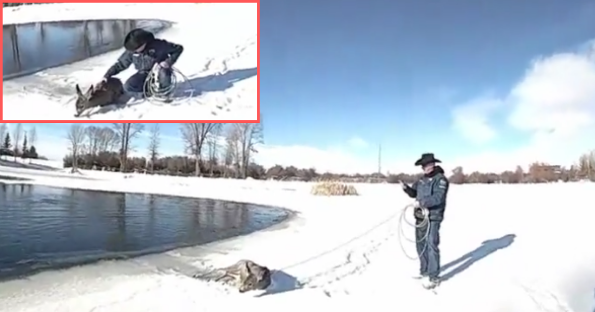 11 20.png - County Sheriff Saved The Life of a Deer Drowning Freezing In The Iced Lake