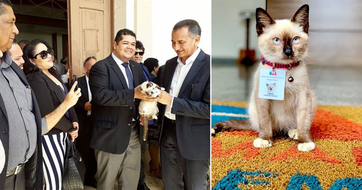5 78.jpg - People Complained About a Stray Cat Roaming Around in a Law Firm, So the Firm Decided to Hire Him