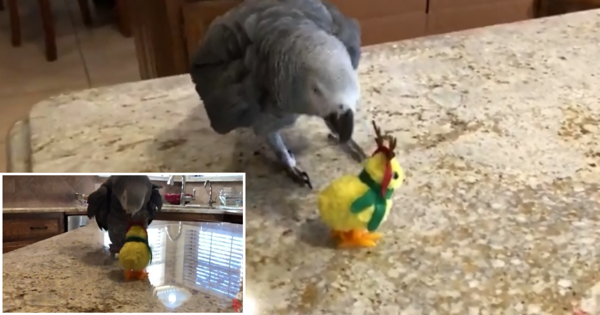 6 56.png - Einstein Parrot Goes to Head to Head With Reindeer