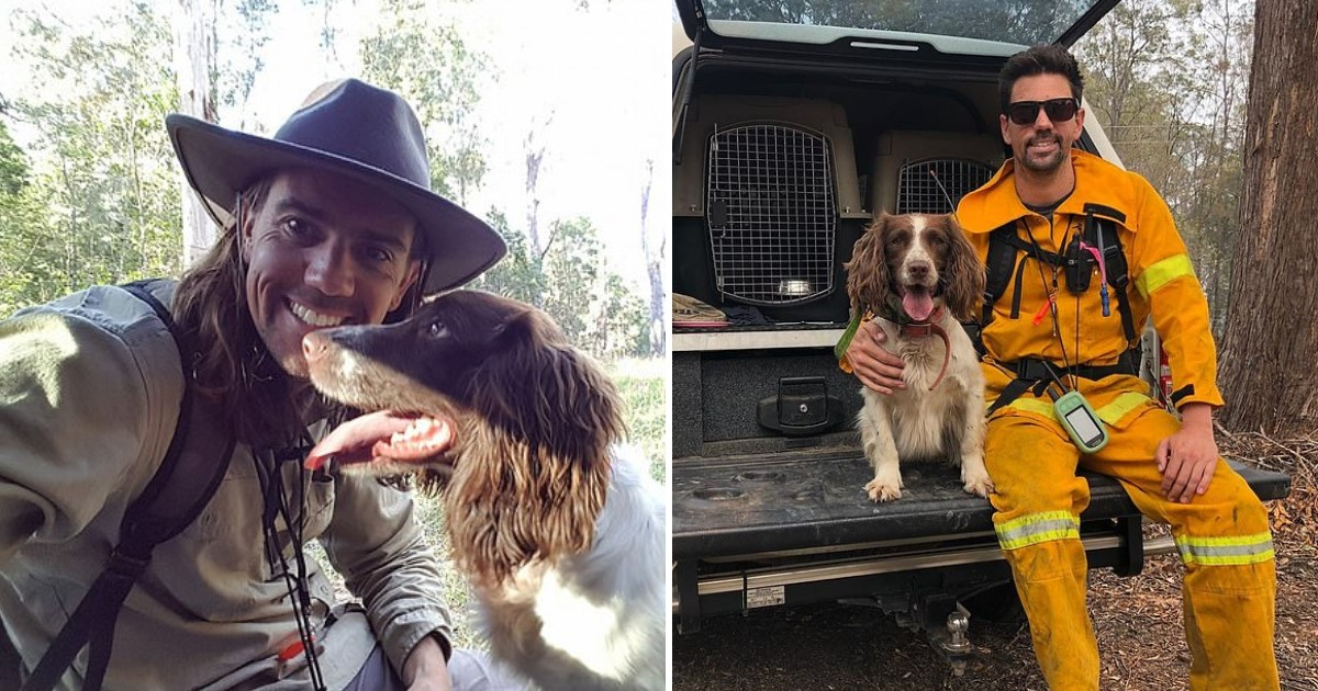 a 9.jpg - Taylor The Hero Dog Saved A Number Of Koalas During Wildfires In Australia