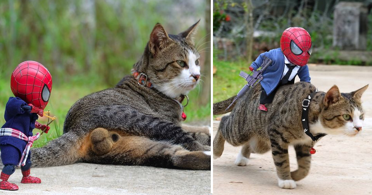 bhsdgs.jpg - Thai Artist Makes Cats Pose With Baby Spider-Man To Create Hilarious Scenarios