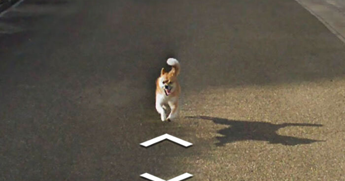 doggo8.png - Tiny Dog Followed Google Street View Car And Hilariously Improved Each And Every Photo