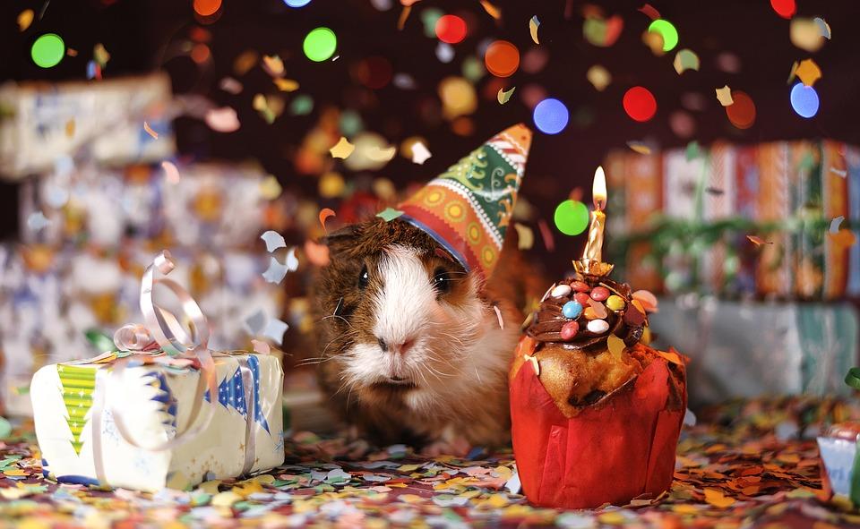 guinea pig 1969698 960 720.jpg - Si votre copain ou copine est né(e) en décembre, vous devez savoir quelques petites choses