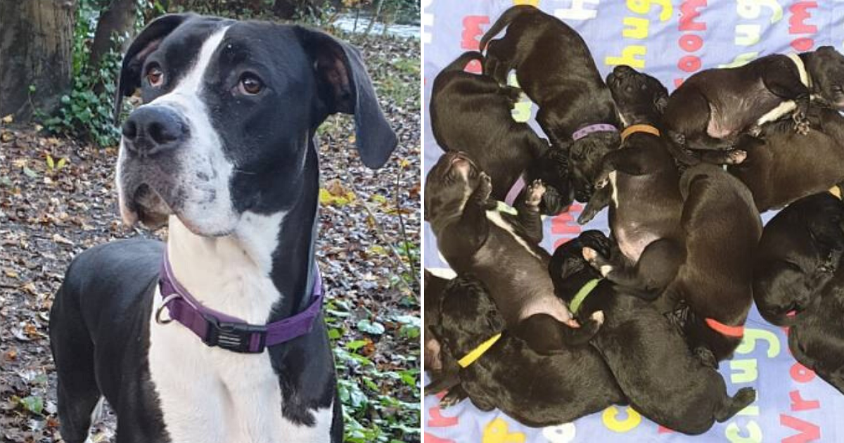 mj6.png - Dog Mary Jane May Have Set A New World Record After Giving Birth Naturally To More Than 20 Puppies!