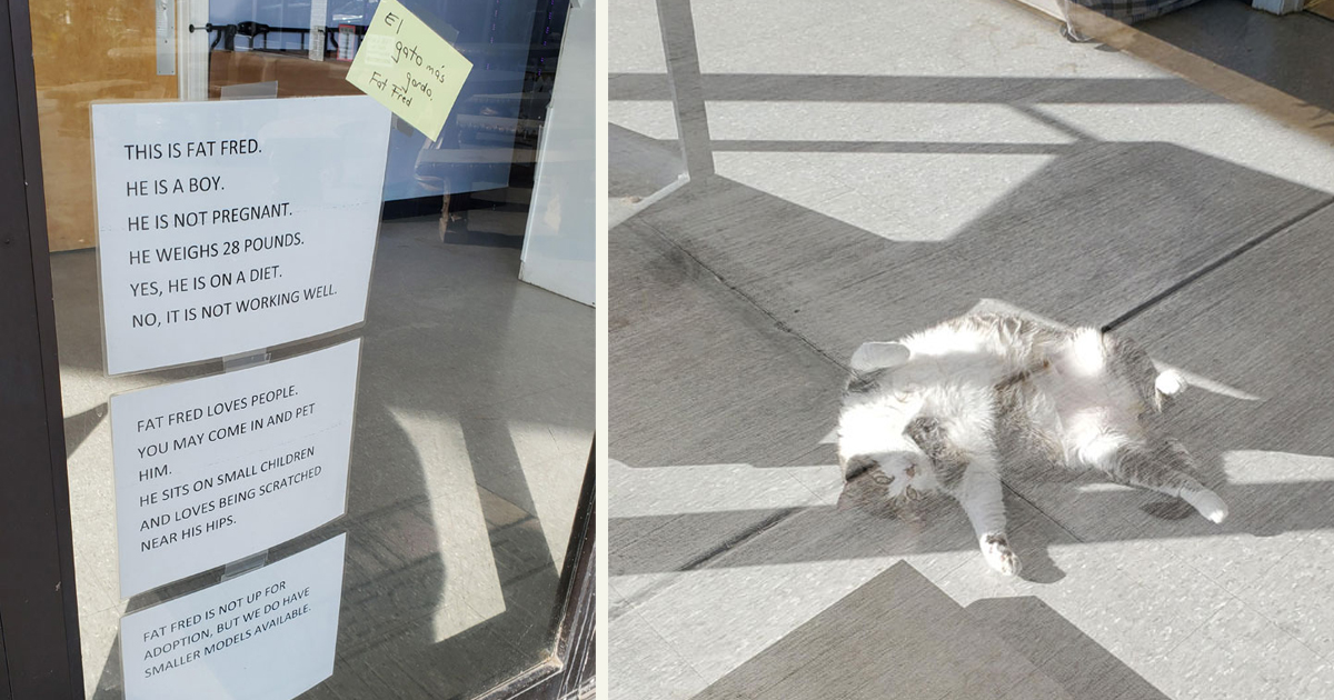 untitled 1 85.jpg - A Cat Went Viral After Someone Posted Photos Of The Vet Clinic's Hilarious Signs