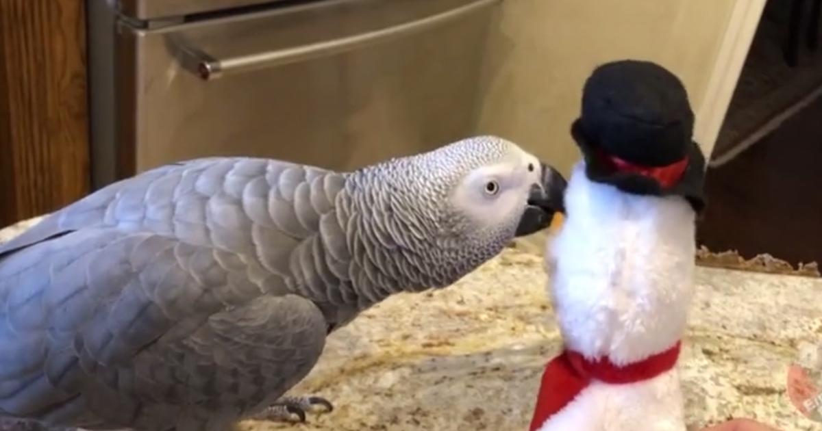 untitled 4 2.jpg - Dancing Parrot Showed Off His Moves To The Toy Snowman