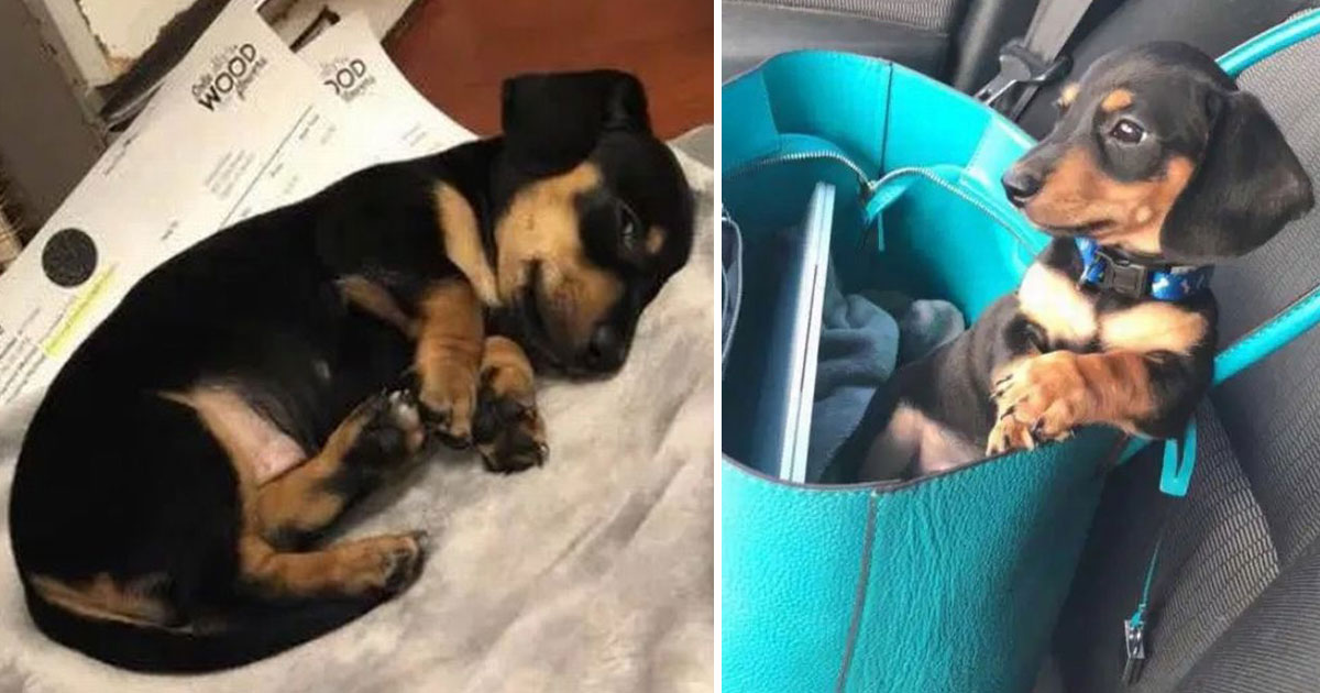 vet put wrong dog to sleep.jpg - Vet Put The Wrong Dog To Sleep After Calling Another Dog's Owner For Consent