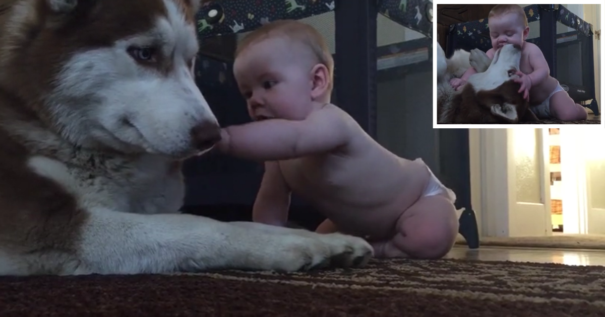 1 1.png - Best Friends for Life Show Their Love For One Another In Adorable Video