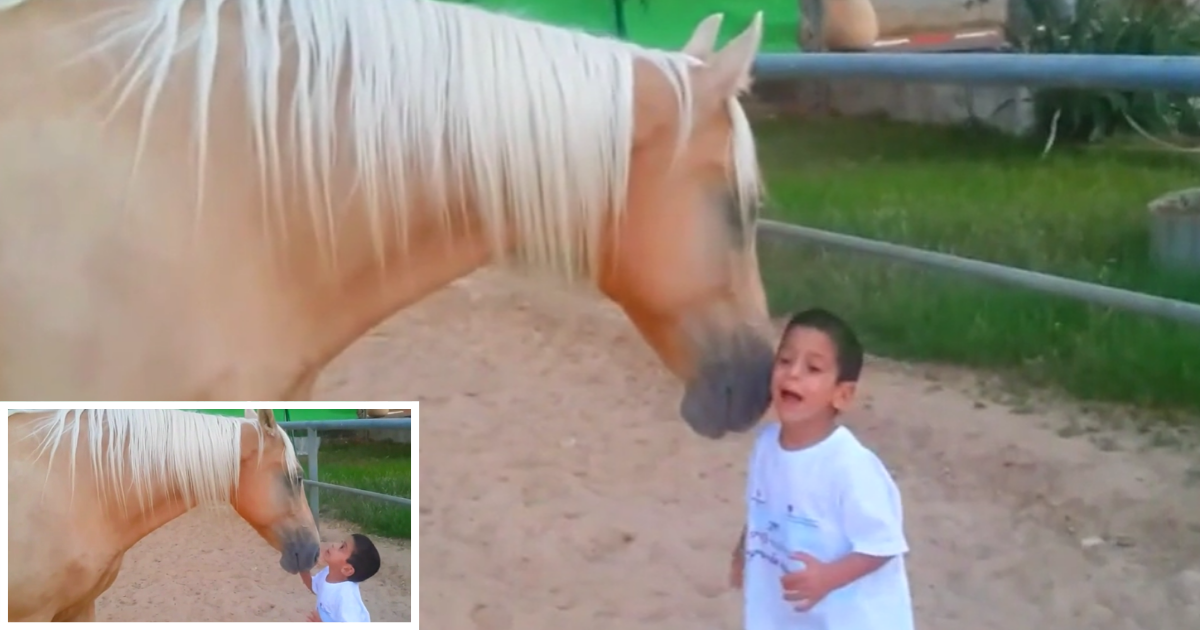 2 1.png - Beautiful First Encounter Between A Horse and a Child With Williams Syndrome