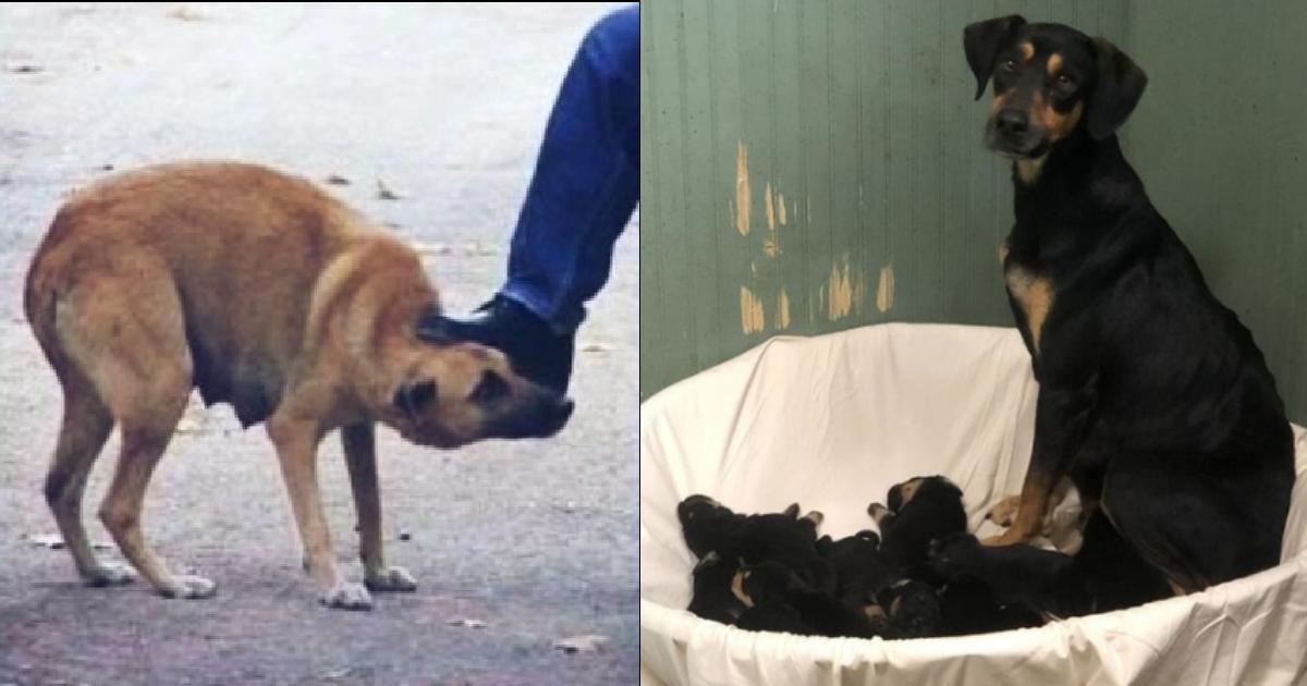 2020 01 29 e6af8de78aac.png - 【衝撃】動物虐待現場を紹介したのは、なんと母犬!27歳女性逮捕‼