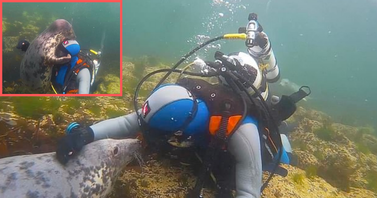 3 6.png - The Diver Encountered A Cute And Friendly Buddy Underwater