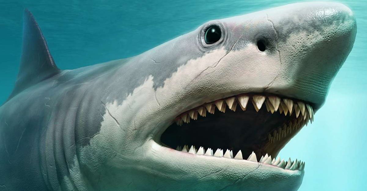 requin e1579887645125.jpg - Australie: Il retrouve le corps sans tête d'un requin de 100kg mordu par une créature encore plus grosse