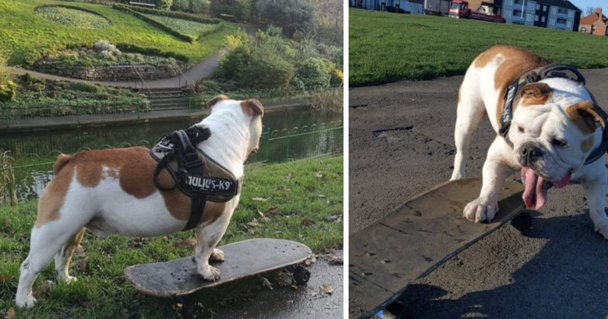 2 29.jpg - A Talented Bulldog Mastered Skateboard At A Young Age And Loves To Use It To Move Around