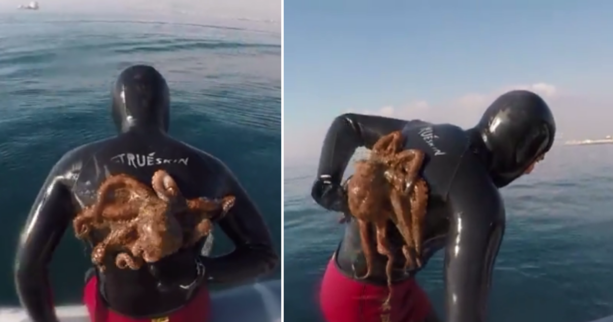 3 60.png - Diver Finds An Octopus Stuck On His Back After Completing His Diving Spree