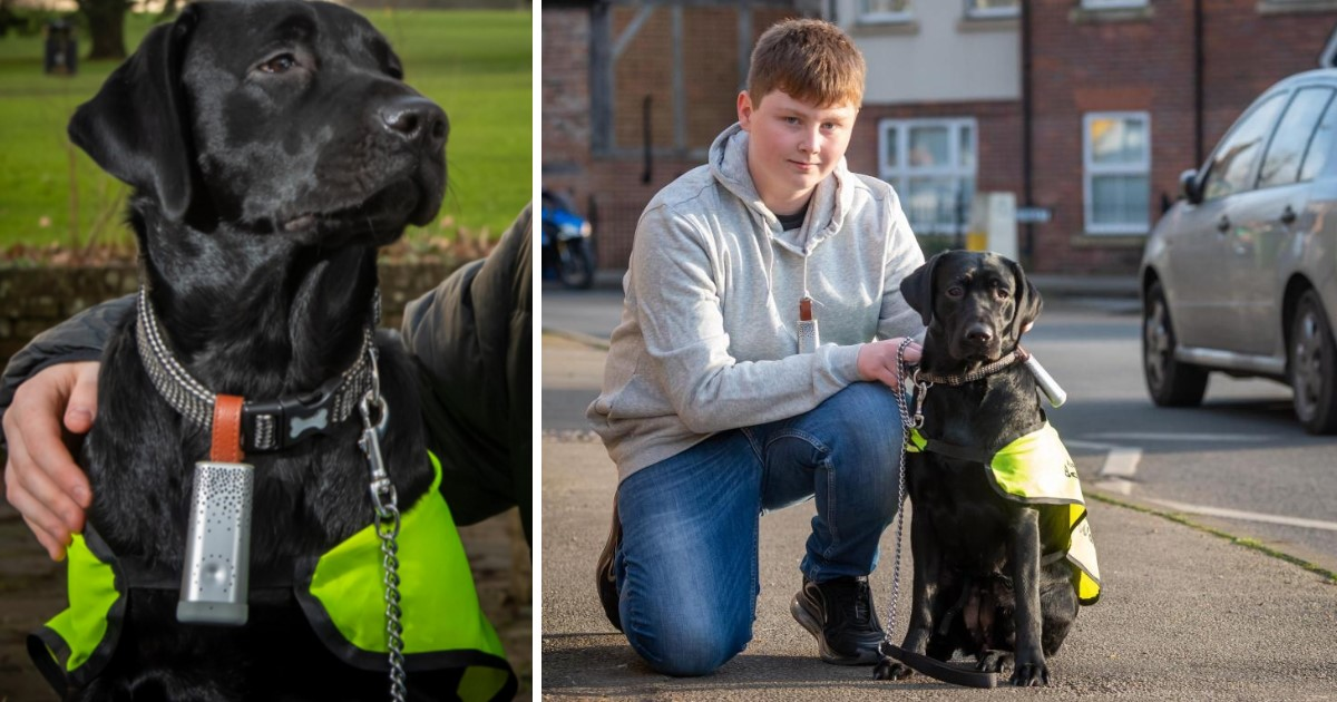 5 39.jpg - Labrador From The UK Became The First Dog To Help Fight Air Pollution
