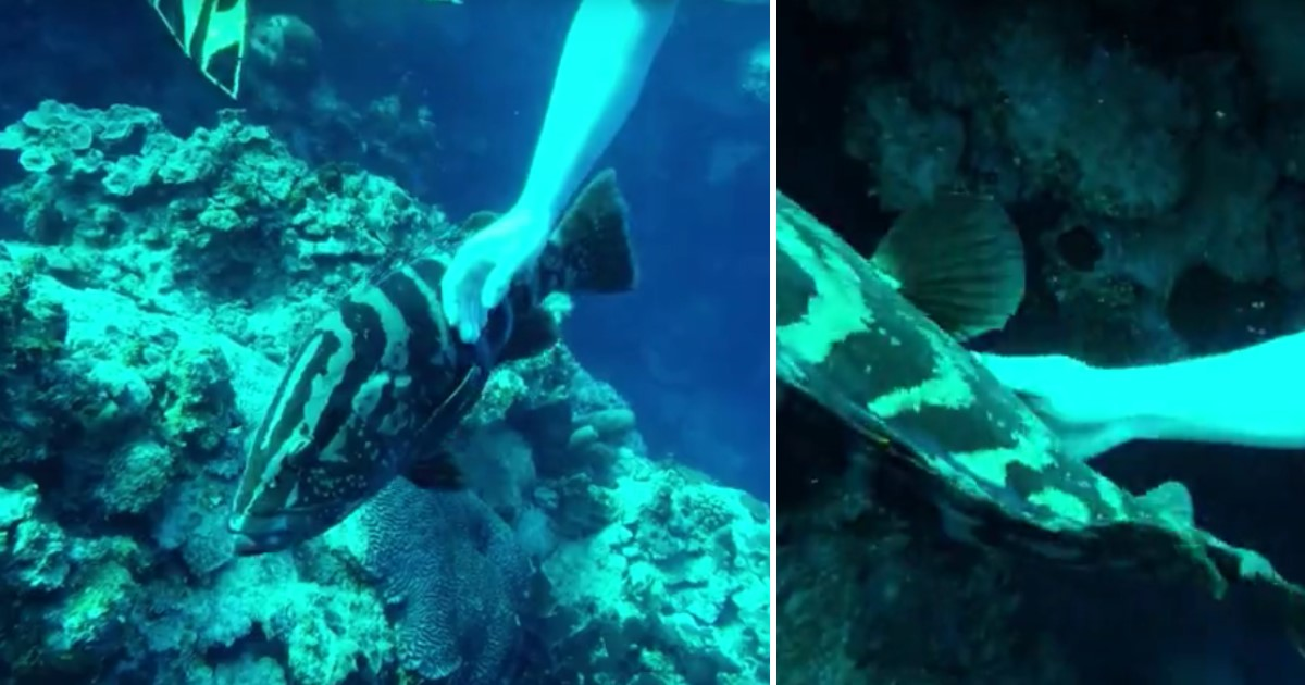 5 6.jpg - A Large Grouper Fish Approached Scuba Divers In Deep Sea