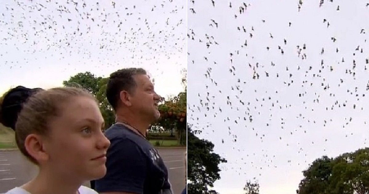 b3 1.jpg - Residents Of A Small Town In Australia Were Left Frustrated With The Swarm Of More Than 300,000 Bats