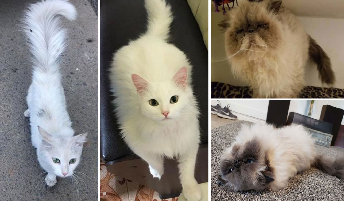 cats.png - People Shared Before And After Photos Of Their Adopted Kittens