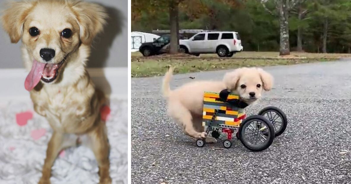 d3 1.png - Unwanted Puppy Got Another Chance To Live A Happy Life With The Help of A Lego Wheelchair Made By a 12 Years Old Kid