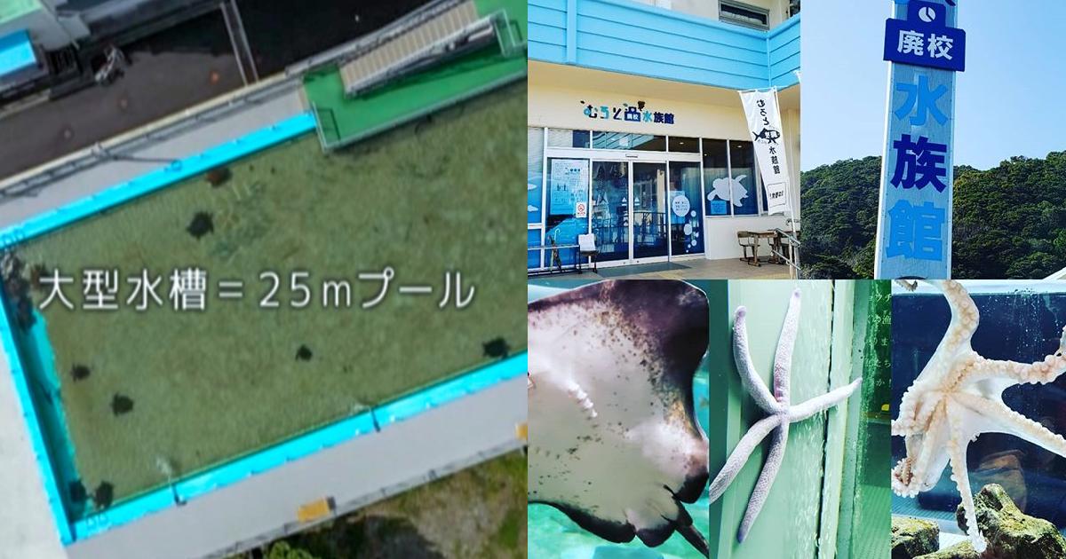 e696b0e8a68fe38397e383ade382b8e382a7e382afe38388 52.png - 【動画有】廃校を水族館に! 思い出のプールに泳ぐサメ?過疎の町の逆転劇