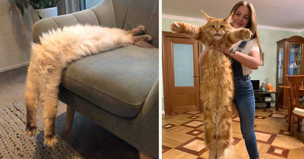 untitled 1 24.jpg - People Are Sharing Pictures Of Their Long Cats