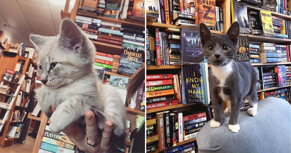 untitled design 4.png - Un livre, un café et ... Un chaton ? Voici une libraire unique en son genre !