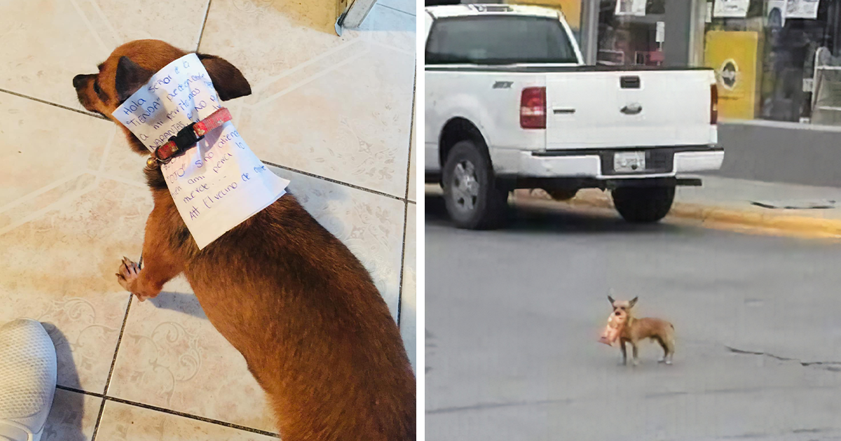 2 67.png - Boy In Quarantine Sent His Dog With Money And A Note To The Store For Some Cheetos