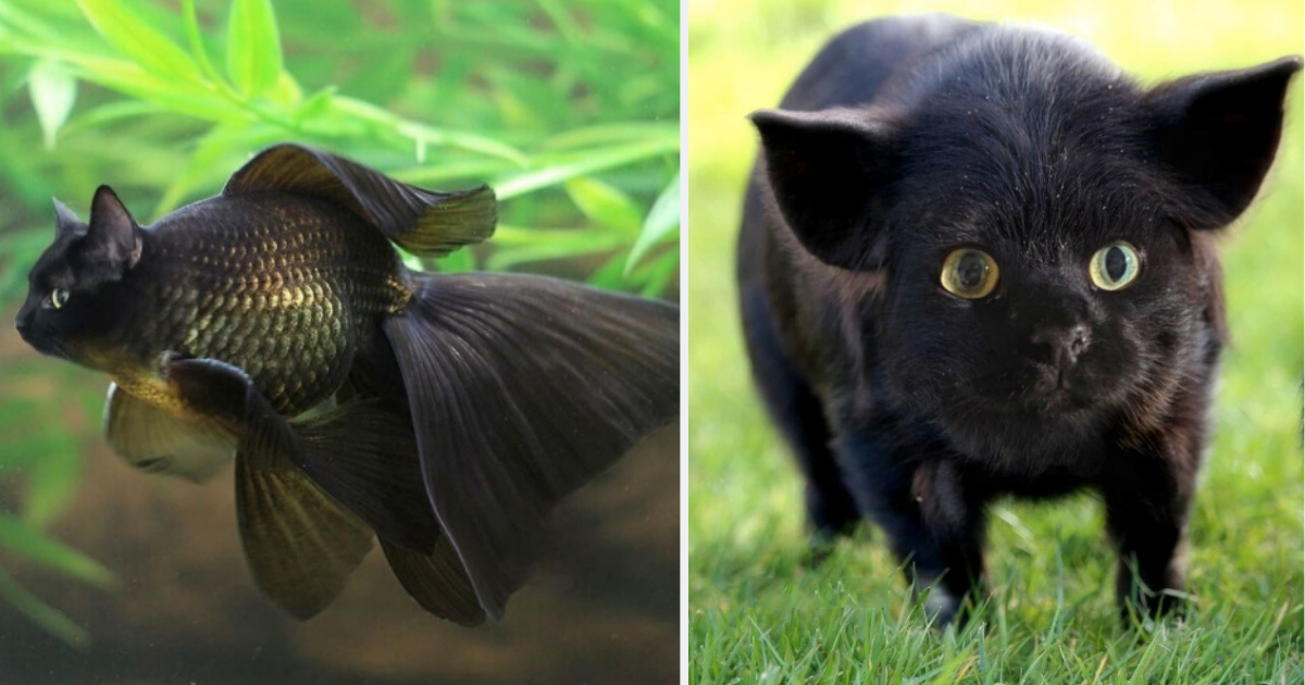 5 62.png - Someone Creates What Animals Would Look Like With Cat Faces And The Results Are Amusing