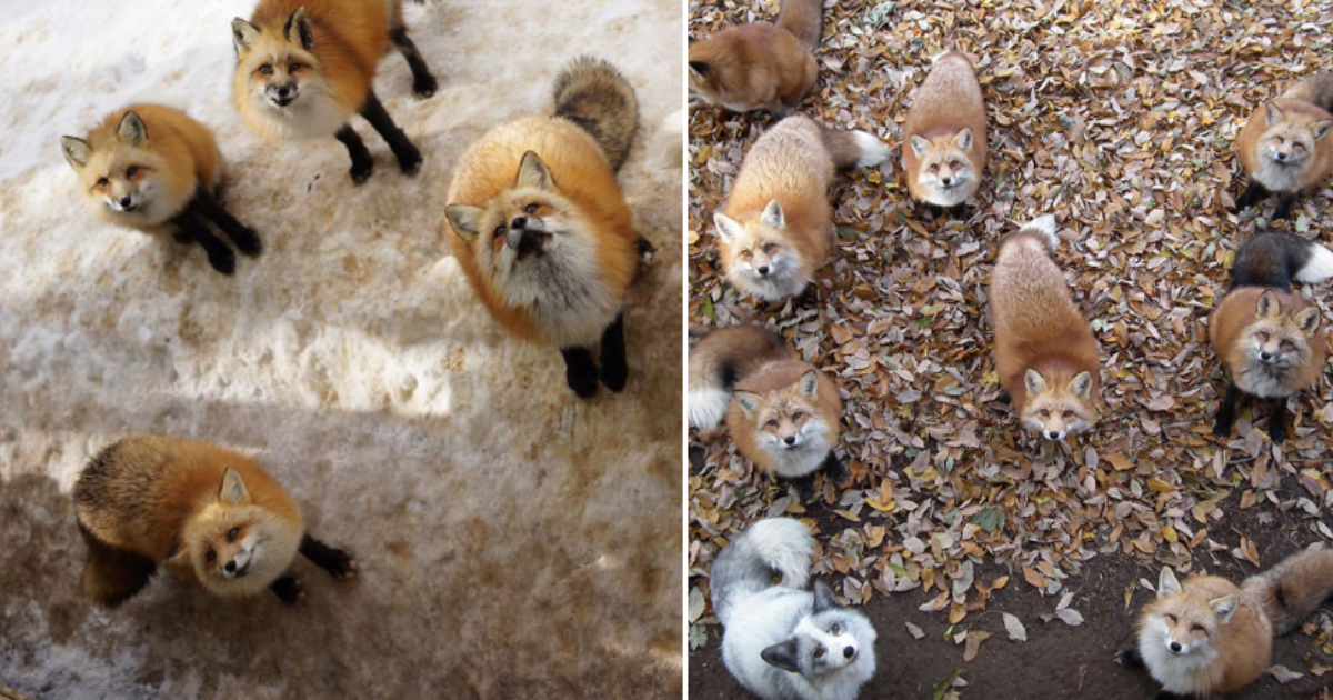 6 43.png - This Fox Village in Japan is The Heaven On Earth