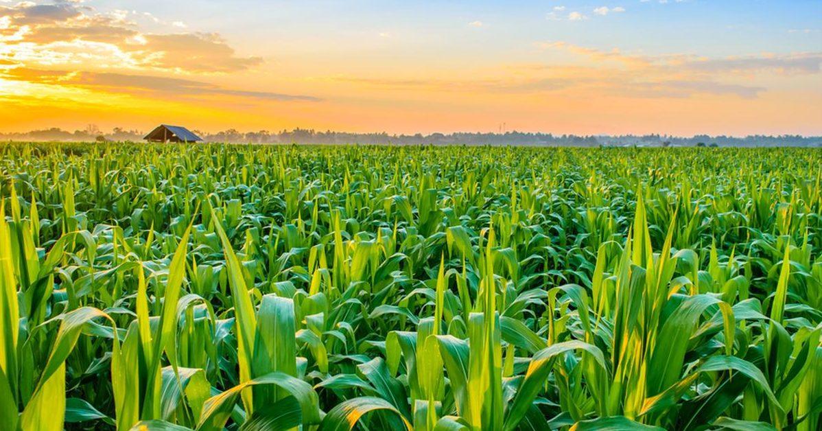 61160 8sbe5pbpfw e1585080728438.jpg - Le ministre de l'Agriculture appelle les Français sans activité à aider les agriculteurs manquant de main-d'oeuvre