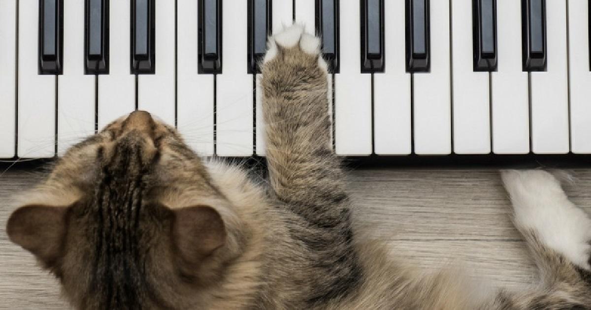 chat.jpg - Ronron thérapie: cette musique a été créée pour détendre votre chat !