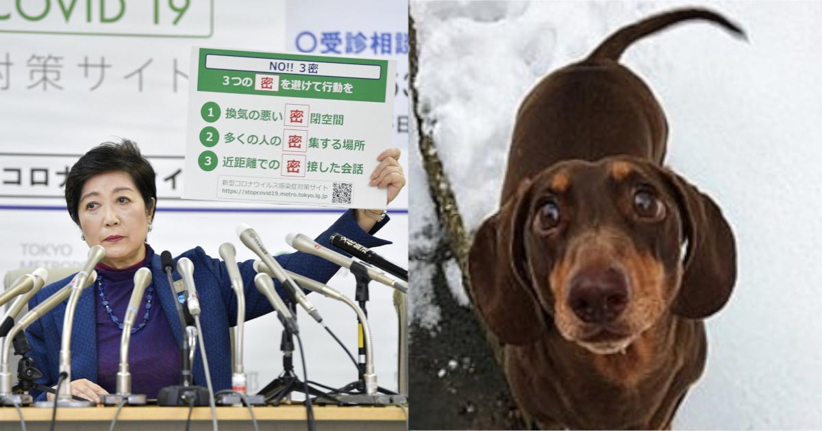 corona 6.png - 【ほっこり】新型コロナで自宅待機を余儀なくされストレスを感じる中、愛犬が尻尾をねんざ⁈ その理由とは⁈