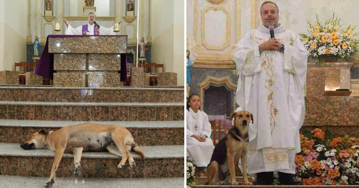 dhdhddd.jpg - Kind-Hearted Priest Brings Stray Dogs To Sunday Mass From Streets To Introduce Them With Adoptive Families