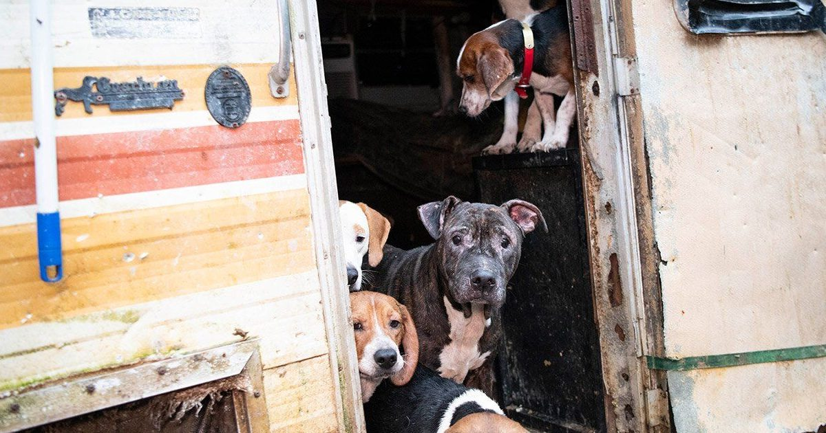 dog e1583133672693.jpg - Humane Society Rescued 140 Dogs In Neglect Situation From A Residential Property In Florida
