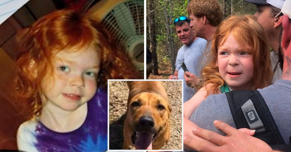 doggo1.png - Dog Was Found Protecting 4-Year-Old Girl Who Had Been Missing For 48 Hours