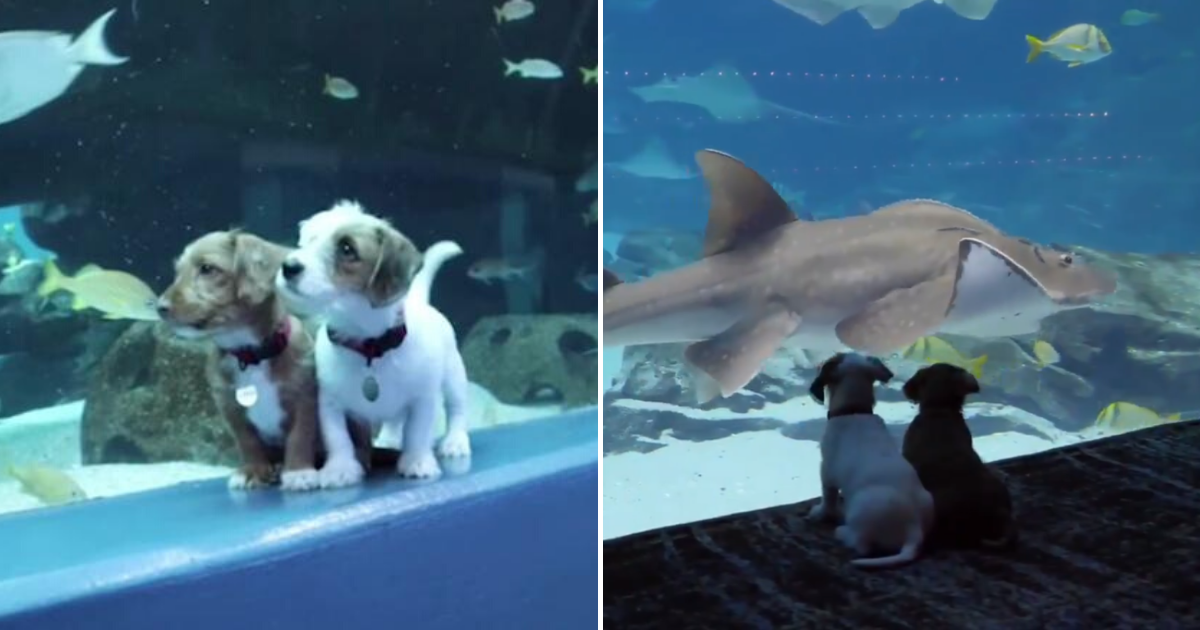 doggoes.png - Two Puppies Roamed Around An Empty Georgia Aquarium While It Was Closed To The Public