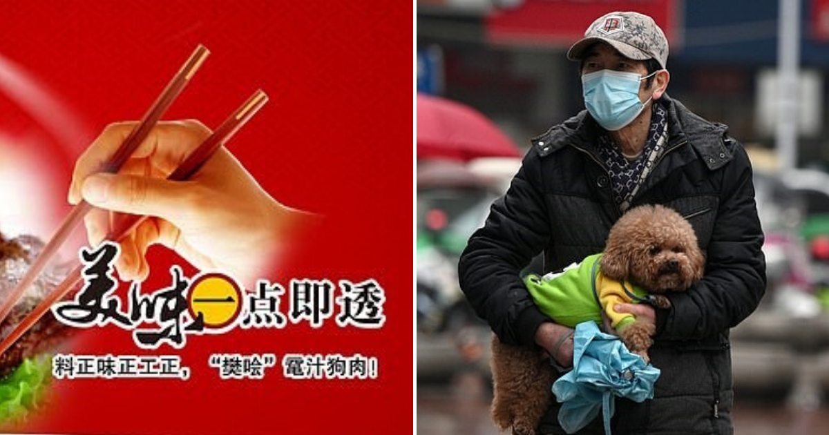 firm3.png - Chinese Company Facing Criticisms For Encouraging People To Consume Pets To Show 'Cultural Confidence' Amid Coronavirus Outbreak