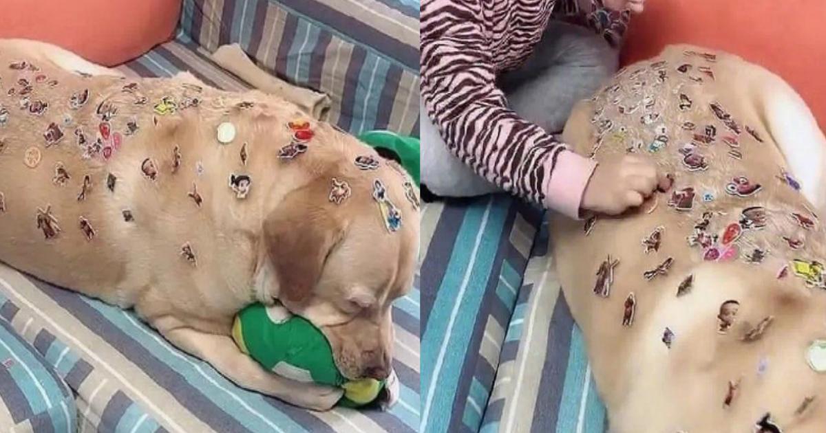 sticker.png - 子どもが犬にイタズラ?大量のシールを貼られるも目をつぶり必死に我慢する飼い犬がかわいそう…