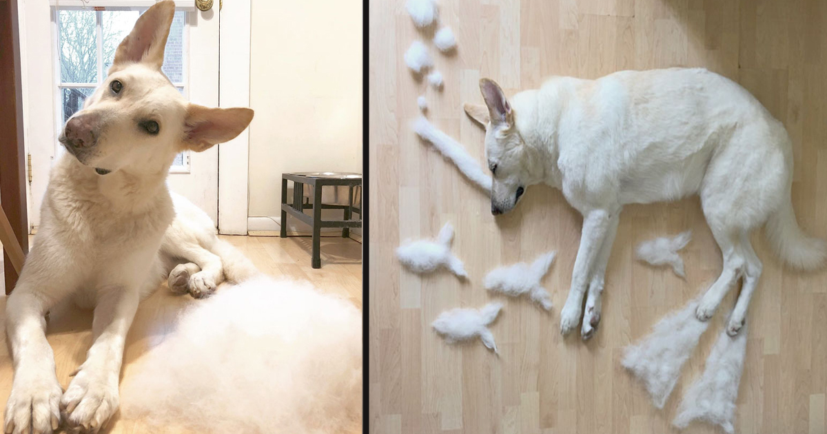 untitled 1 9.jpg - This Woman Makes Her Dog's Shedding Fun By Turning It Into Art