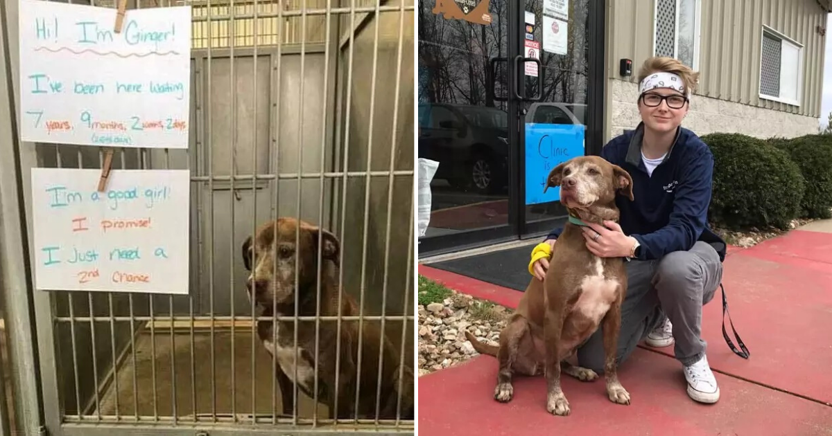 untitled design 17 1.png - Shelter Dog Finally Adopted After Seven Years Of Waiting For A Forever Home
