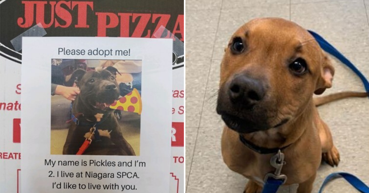 untitled design 23.png - Pizza Shop Placing Pictures Of Shelter Dogs On Pizza Boxes To Encourage People To Adopt Them