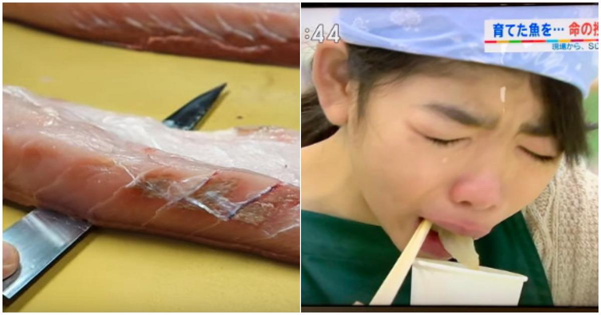 """4 4.png - """"왜 우는 애까지 반강제로 먹였는가""""...한 일본 방송에서 직접키운 물고기 눈앞에서 """"손질해 먹는"""" 수업 논란"""