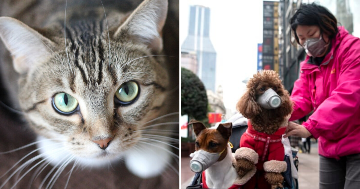 cats.png - Pet Cat In Hong Kong Becomes The Second To Test Positive For Coronavirus