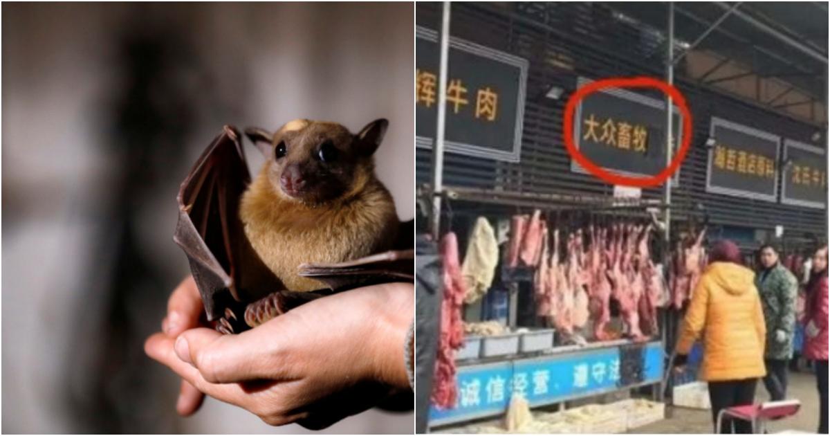 collage 10.png - 코로나19를 극복했다는 중국, 다시 오픈한 우한 야생동물 시장 '근황' (사진)