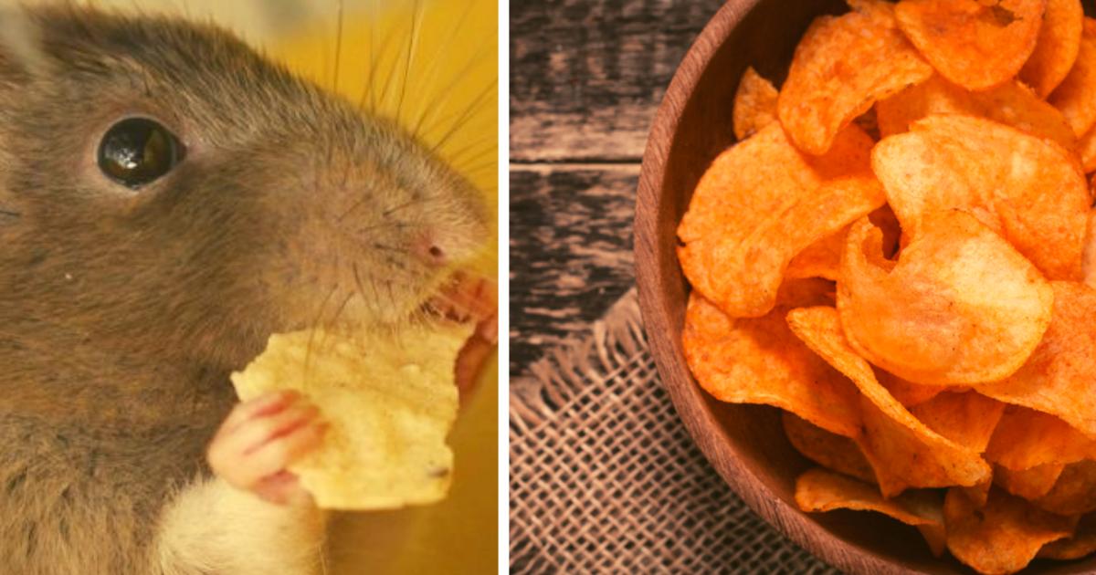 diseno sin titulo 1 4.png - ¡Mujer Encuentra Dentro De La Bolsa De Papas Fritas Que Se Iba A Comer, Una Horrible Rata!